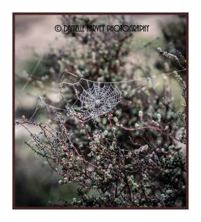 Diamond Filled Spider Webs